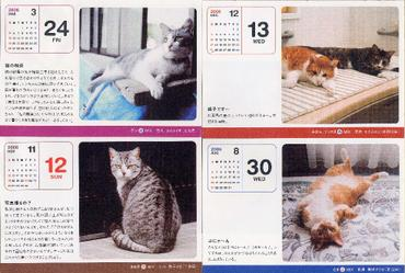 2006cats3_1