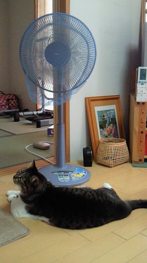 ♪猫と絵画と扇風機♪
