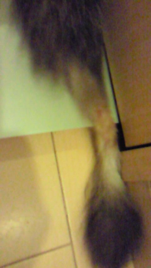ねこだいすき。2010/08/02 09:40